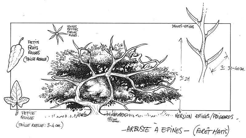 Croquis du botaniste royal